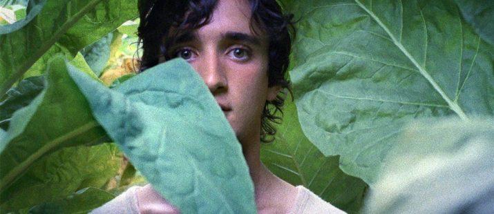 Les millors pel·lícules europees de 2019 segons l'ACCEC